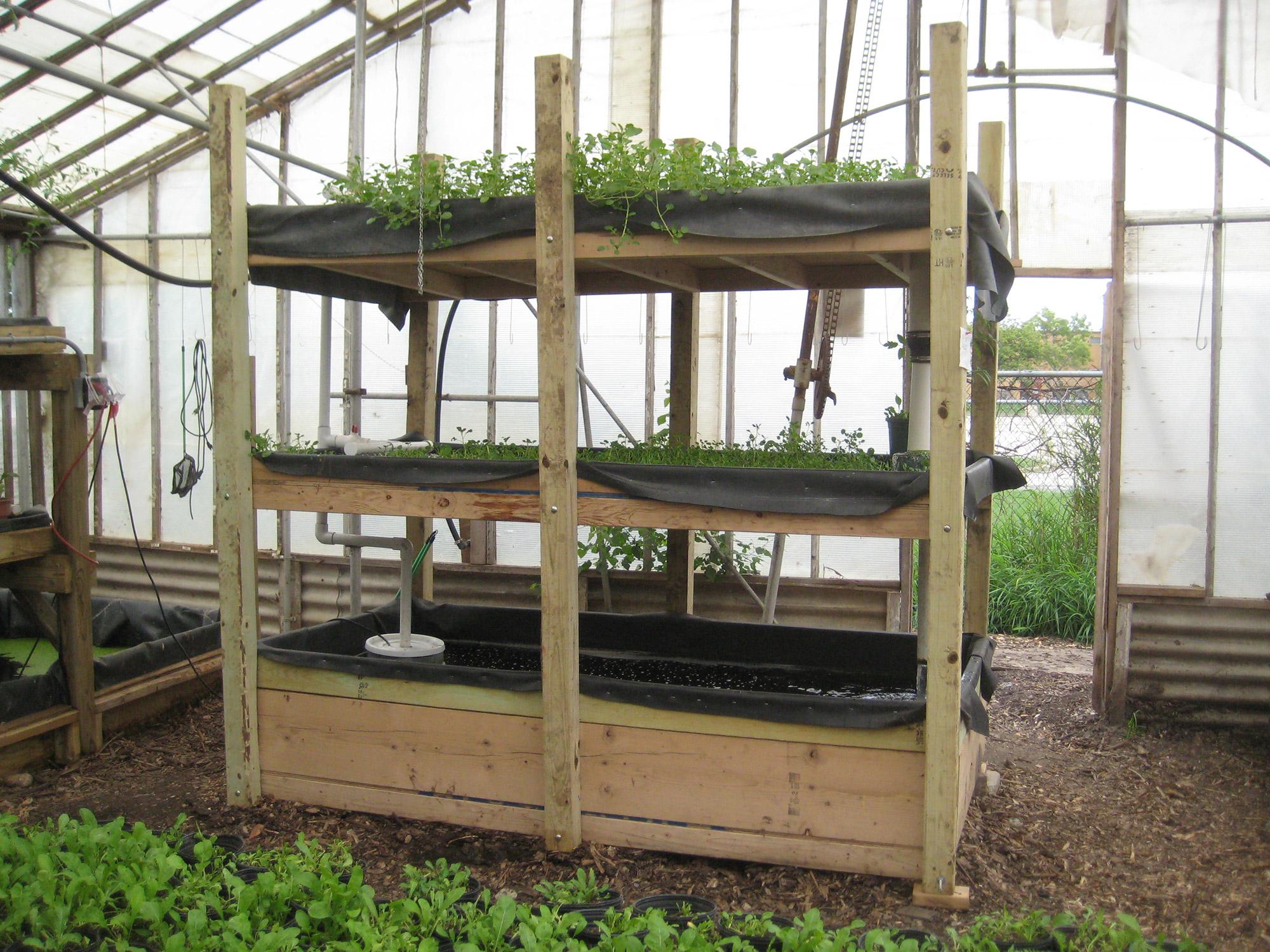 Todo lo que necesitas saber sobre la acuaponía - Sensi Seeds Blog