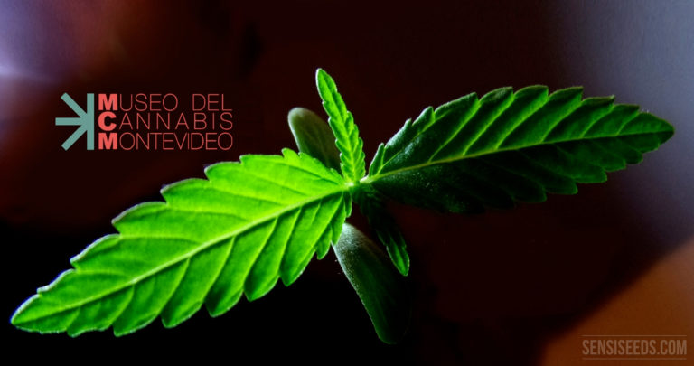 THE FIRST CANNABIS MUSEUM OF SOUTH AMERICA OPENS ITS DOORS