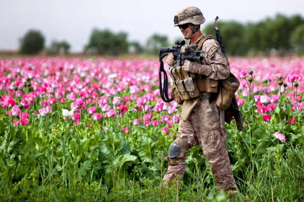 US Soldier patrols opium field in Afghanistan (© Defense.gov)