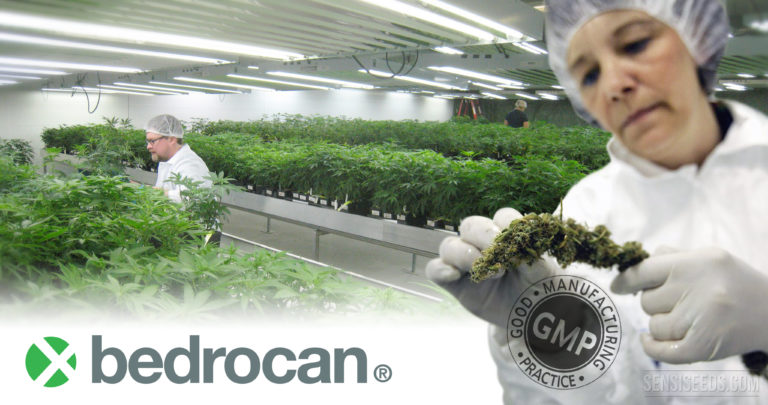 Bedrocan Now World's First GMP-Approved Medicinal Cannabis Producer