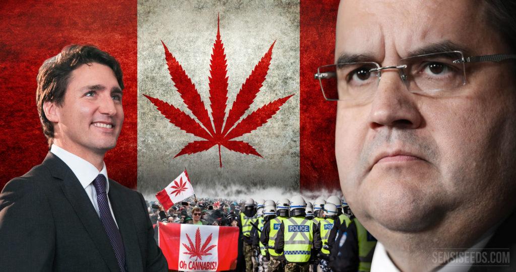 Canada: legalisering van cannabis problematischer dan verwacht