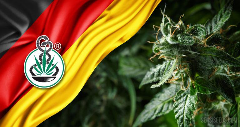 Deutschland legalisiert medizinische Cannabisblüten