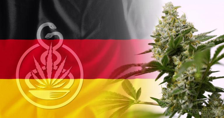 Première récolte légale de plantes de cannabis médicinal