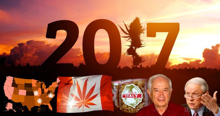 De mondiale cannabisindustrie anno 2017