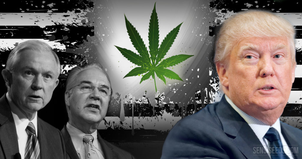Trump and Cannabis: A mixed bag of different influences