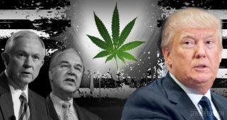 Trump et la question du cannabis : un amalgame de différentes influences