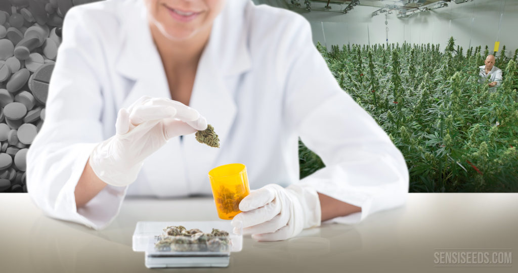 Which Pharmaceuticals Could Cannabis Replace? - Sensi Seeds Blog