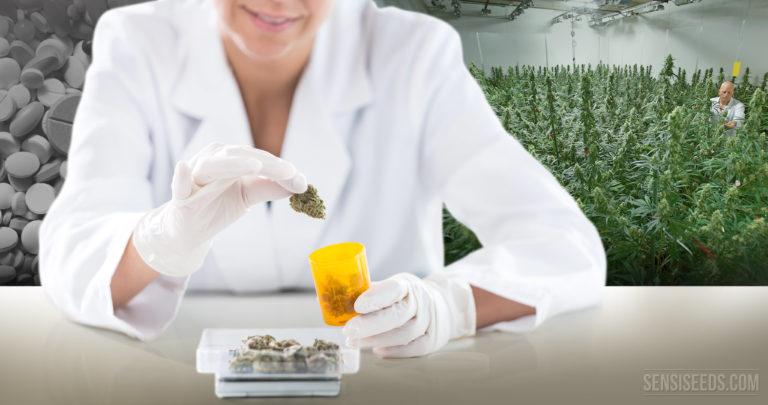 ¿A Qué Medicamentos Podría Sustituir el Cannabis?