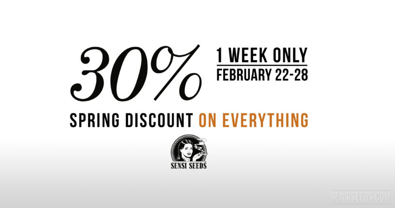 Spring Discount: 30% on everything