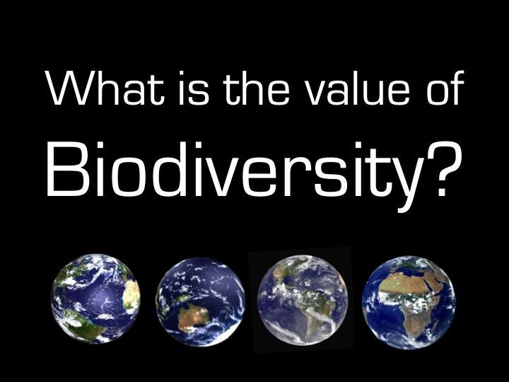 Der Verlust an Biodiversität könnte das gesamte Leben auf der Erde bedrohen (© planeta)
