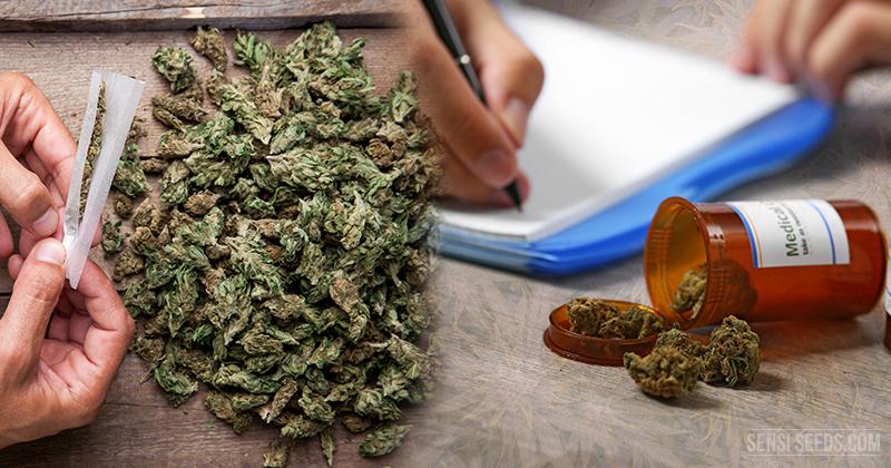 Le cannabis uniquement légalisé à des fins médicales – une illusion, les conséquences - Sensi Seeds Blog