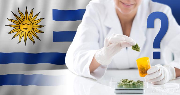 Uruguay verschiebt den Verkauf von Cannabis erneut