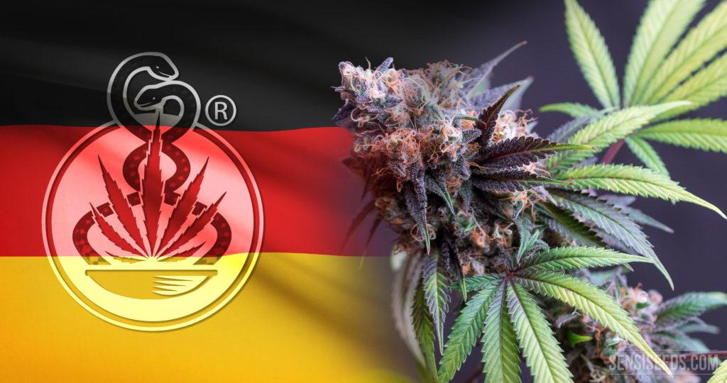 Un programa de cannabis medicinal con problemas iniciales