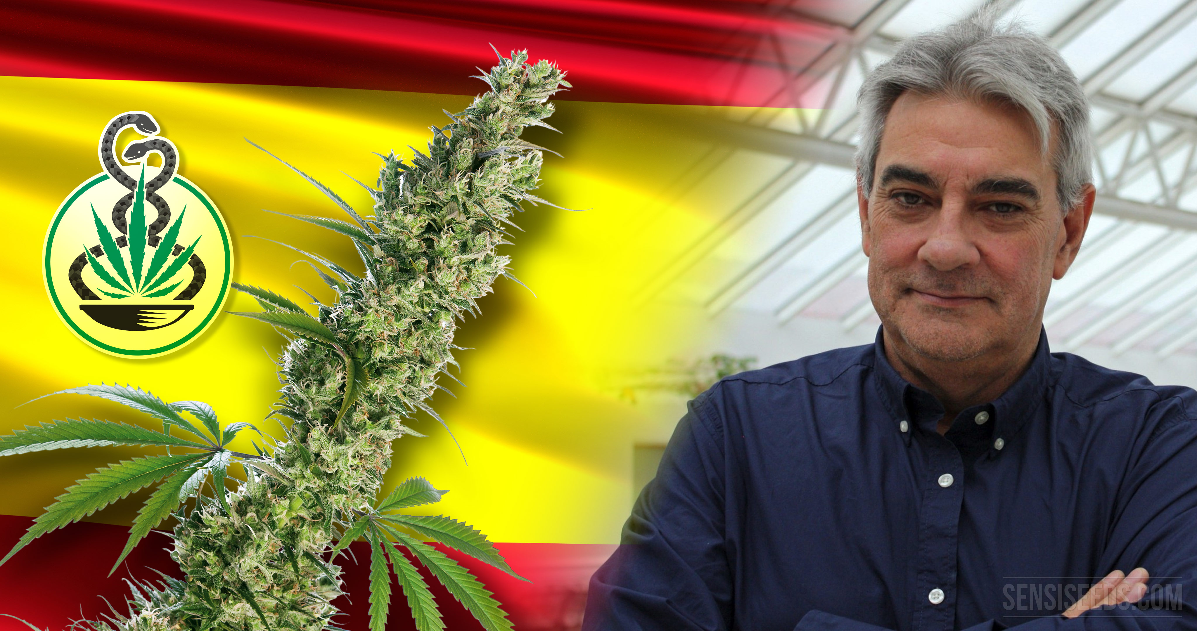 "Spanish MP Wants to Legalise ""Medical Cannabis Now!"""