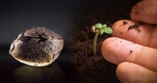 Zaadbanken vechten om 's werelds plantensoorten te conserveren