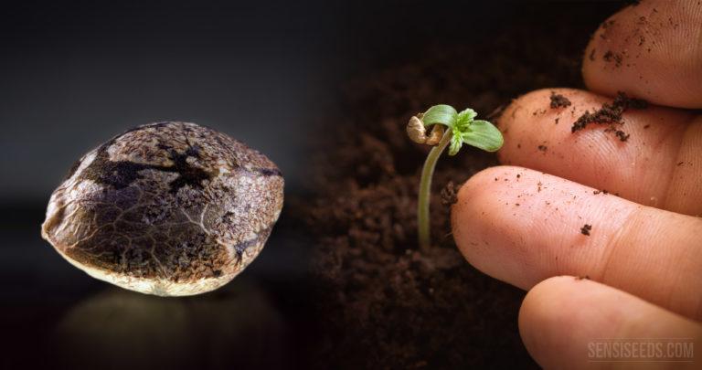 Les banques de semences pour préserver les végétaux de la Terre