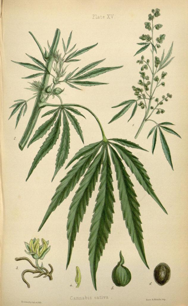 El Reino Unido Reconoce Oficialmente el CBD como Medicina - Sensi Seeds Blog