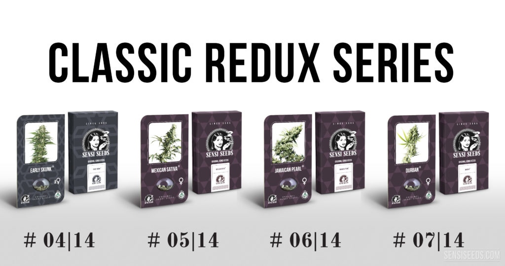 The Classic Redux Series continues with four new cannabis strains - Sensi Seeds Blog