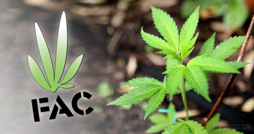 Interview mit Javier Puig, Vorsitzender des Cannabis-Verbandes FAC - Sensi Seeds Blog