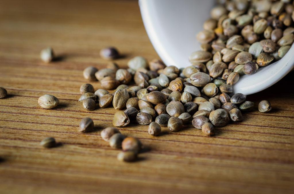 Cannabisteelt en duurzaamheid - Sensi Seeds Blog