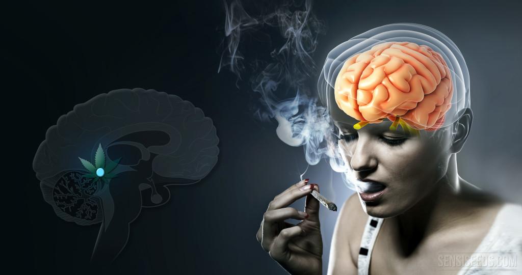 Was passiert in der Epiphyse, wenn wir Cannabis nehmen?