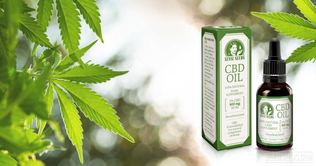 Fotomontaje que muestra a la derecha el envase y el frasco con aceite de CBD de Sensi Seeds y a la izquierda varias hojas de una planta de cannabis. El segundo plano está desenfocado con el efecto Bokeh.