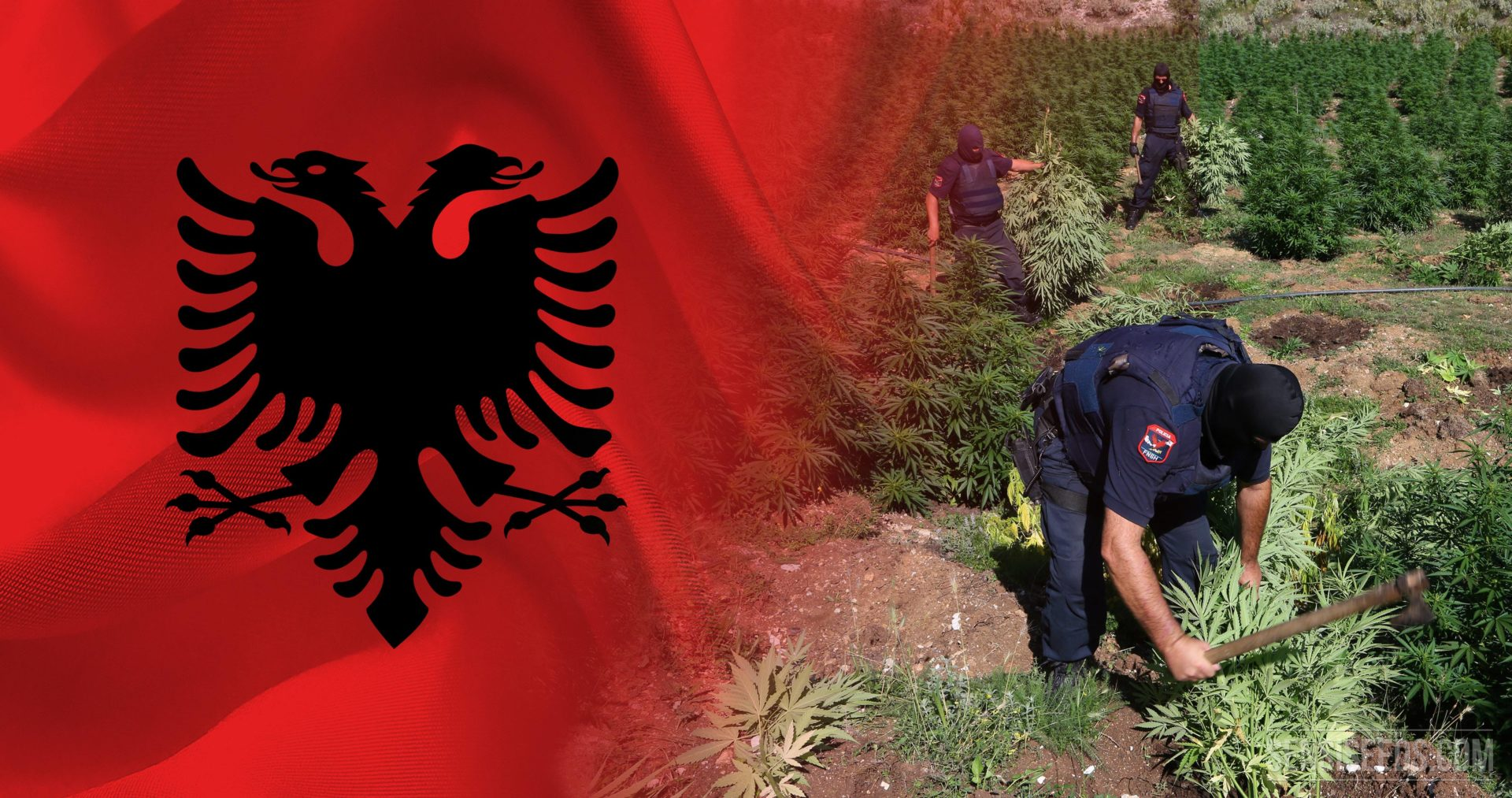 Cannabis remains Albania's hit export