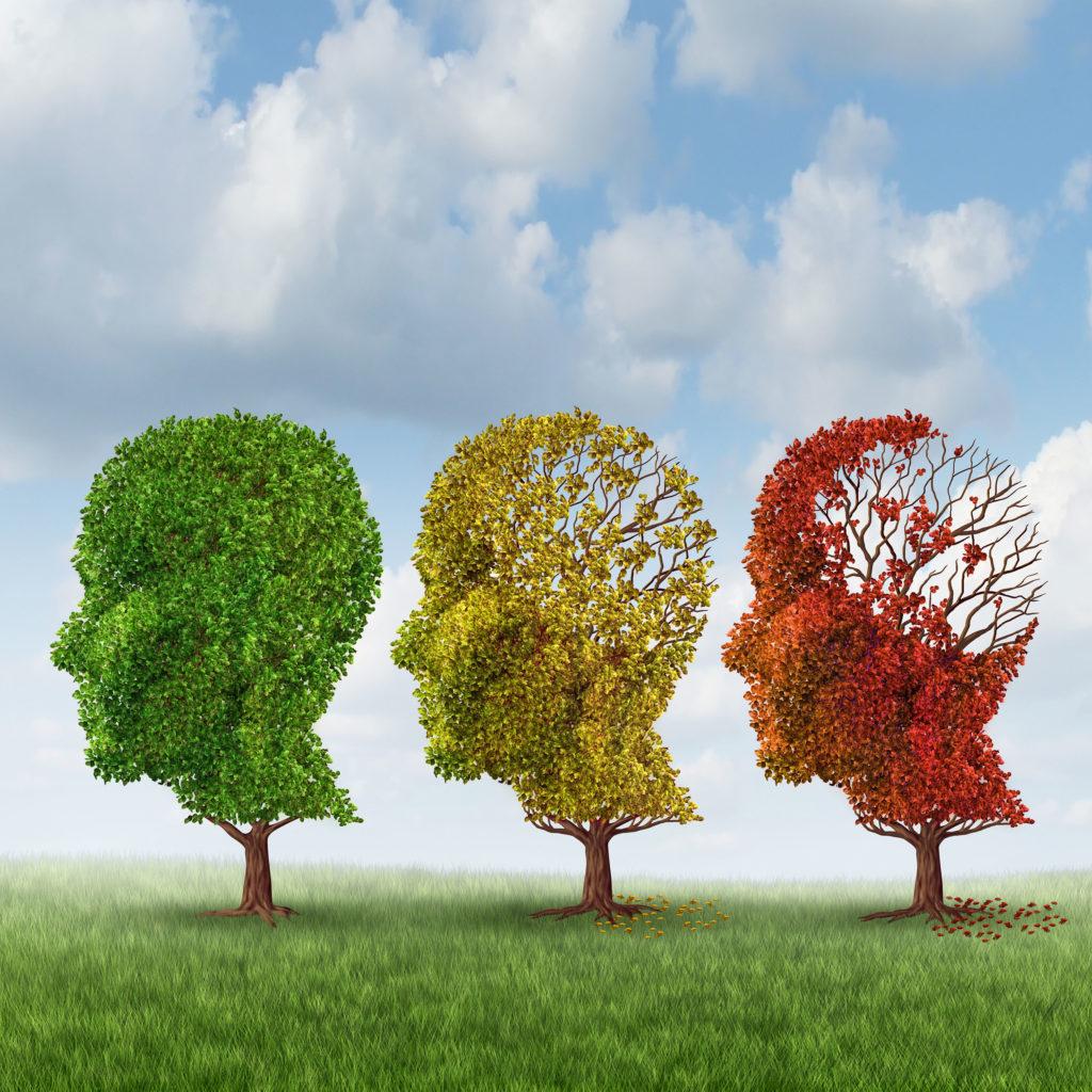 Nuevo Estudio: El THC Tiene Efectos Rejuvenecedores en el Cerebro - Sensi Seeds Blog