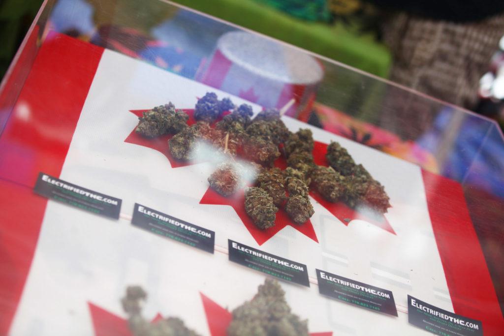 Een foto van een Canadese vlag met bijgesneden cannabistoppen op het esdoornblad in een vitrine