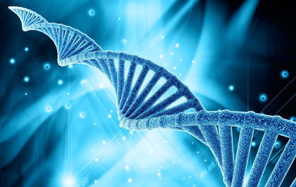 Jedes DNA-Molekül besteht aus zwei Ketten bzw. Bändern (CC. Mehmet Pinarci)