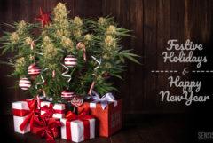 """Fotomontage, die links einen Cannabis-Weihnachtsbaum zeigt mit Geschenken und Zuckerstangen vor einem hölzernen Hintergrund. Rechts steht in einer weißen Schrift """"Festive Holidays & Happy New Year""""."""