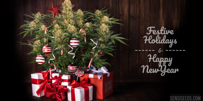 "A photomontage showing on the left, a cannabis Christmas tree with presents and candy canes next to it, on a wooden background. On the right a text written in a whimsical font reads ""Festive Holidays & Happy New Year""."
