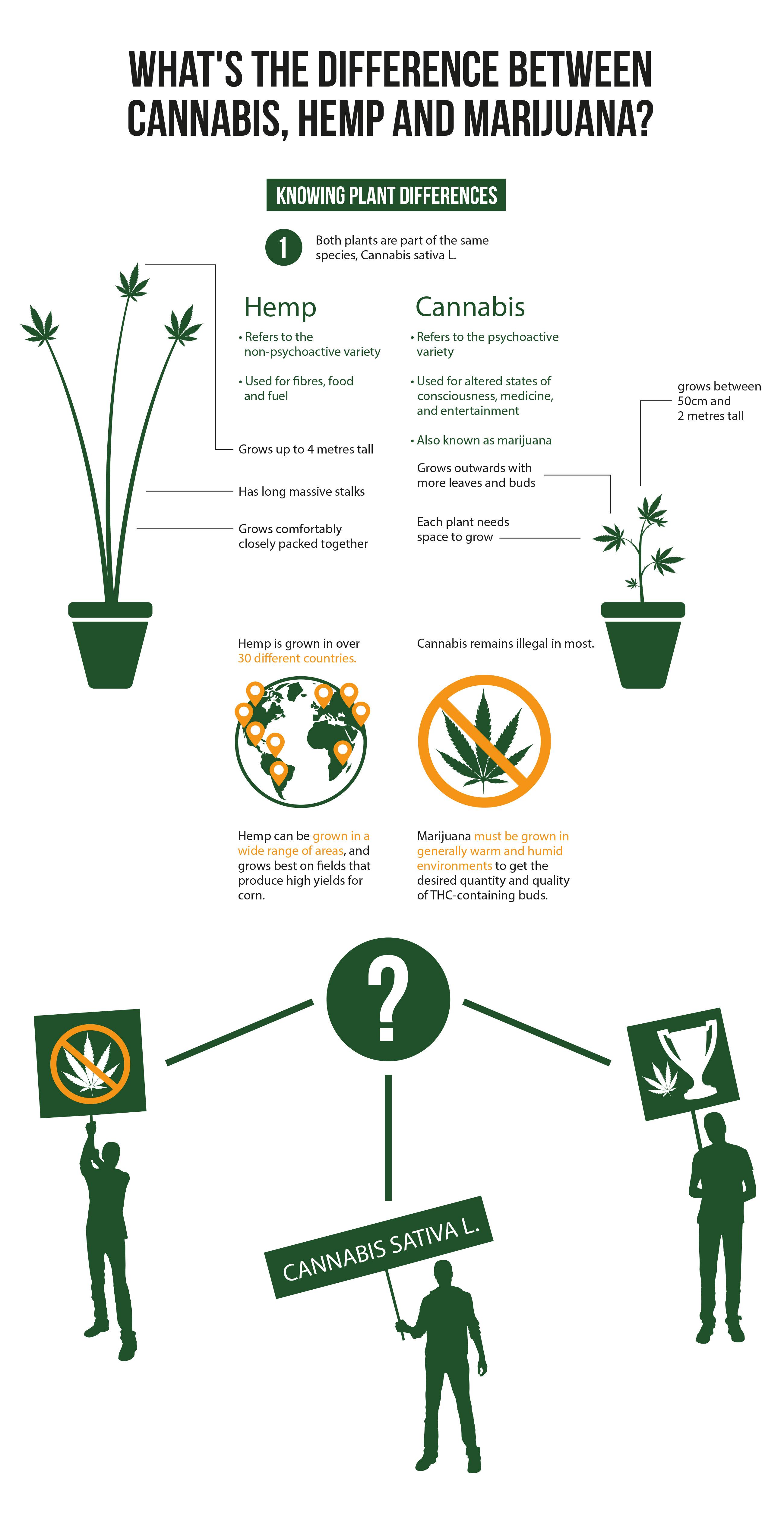 """Infografía que explica las diferencias entre Cannabis, Cáñamo y Marihuana. Una sencilla ilustración en verde muestra una planta de cáñamo en una maceta en el extremo izquierdo. Una serie de viñetas, así como las líneas correspondientes, desglosan las características de una planta de cáñamo. A la derecha, hay una pequeña planta de cannabis ilustrada en verde en una maceta. Esta también tiene un listado de información que explica la planta. En el centro de la infografía, hay una imagen de un globo terráqueo con indicadores naranjas en el mapa que muestran los diferentes países en los que se cultiva cáñamo. A la derecha del globo, hay un icono de una hoja de cannabis con un círculo de color naranja y una barra que lo atraviesa. Por encima, está escrito """"El cannabis sigue siendo ilegal en la mayoría"""". En la parte inferior de la imagen, hay un signo de interrogación escrito con espacio negativo en blanco en un círculo verde. Del signo de interrogación, salen tres líneas que apuntan hacia la parte inferior izquierda, la central, y la parte inferior derecha. Hay tres siluetas representadas que llevan diferentes pancartas: una pancarta contra el cannabis, una pancarta de Cannabis sativa L. y otra con una hoja de cannabis al lado de un trofeo."""
