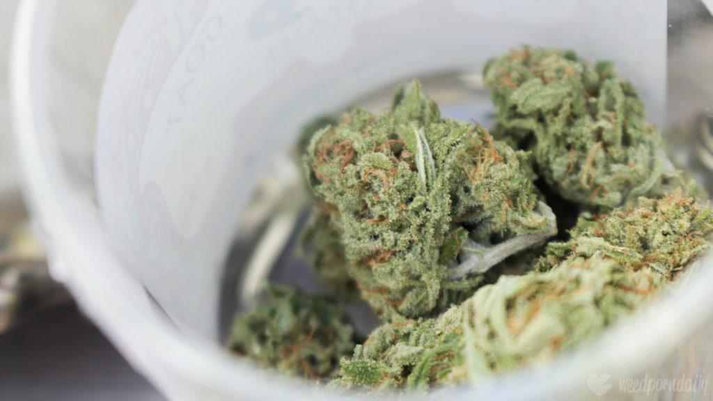 Nahaufnahme von Cannabis-Buds, die sich in einem geöffneten Behälter befinden.
