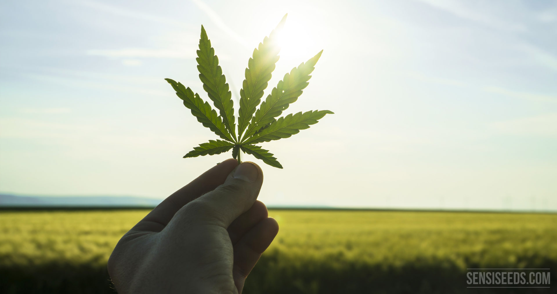 Ist Marihuana