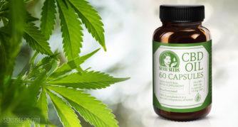 """Produktfoto von CBD-Öl von Sensi Seeds. Eine braune Flasche mit CBD-Kapseln wird neben einer Cannabispflanze gelagert. Neben dem Sensi-Seeds-Logo ist in großer Schrift """"CBD Oil 60 Capsules"""" aufgedruckt. Die Farbgebung ist vollständig weiß und grün. Auf dem Boden der Flasche steht geschrieben, dass es sich um ein hundertprozentig natürliches und decarboxyliertes Nahrungsergänzungsmittel handelt und dass der durchschnittliche CBD-Gehalt 3 % beträgt – insgesamt 900 mg, also 15 mg CBD pro Kapsel."""