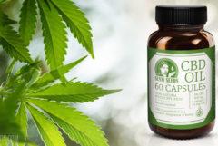 Photo du produit d'huile de CBD de Sensi Seeds. Une bouteille brune de CBD est superposée sur un espace blanc à côté d'une plante de cannabis. Elle porte l'inscription en grands caractères 60 capsules d'huile de CBD à côté du logo Sensi Seeds. La palette de couleurs n'est composée que de blanc et de vert. Dans le bas de la bouteille est inscrit Complément alimentaire décarboxylé 100 % naturel, contenu moyen en CBD 3 % pour un total de 900 mg, 1 capsule = 15 mg de CBD.