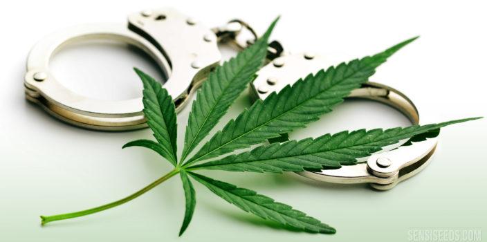 Pourquoi les théories de conspiration contre le cannabis sont-elles absurdes ?