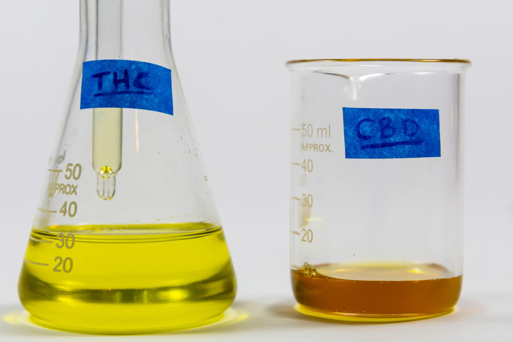 A photograph of a two beakers, one labelled THC, the other CBD. The THC beaker is filled nearly half way with with a light greenish yellow liquid, the CBD beaker is less full and contains an amber brown liquid.