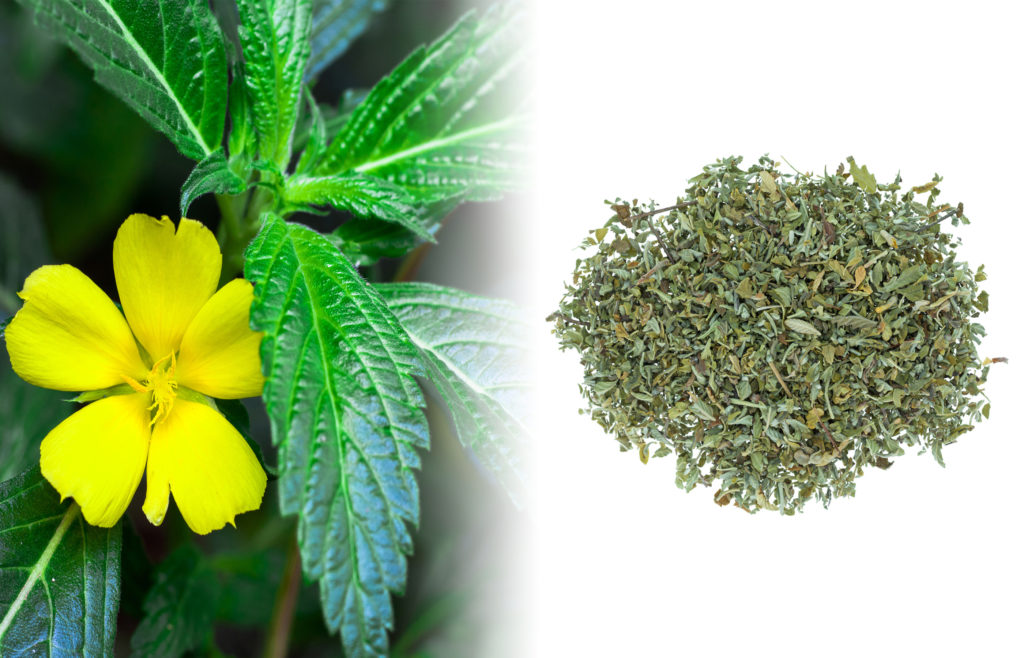 Een close-up van de Damiana-bloem en plant. De verse plant heeft lichtgroene, lange en smalle bladeren met kartelrand. Hij heeft ook kleine gele bloemetjes. Naast de verse plant staat een gedroogde, geelbruine kruidenmix op een wit oppervlak.