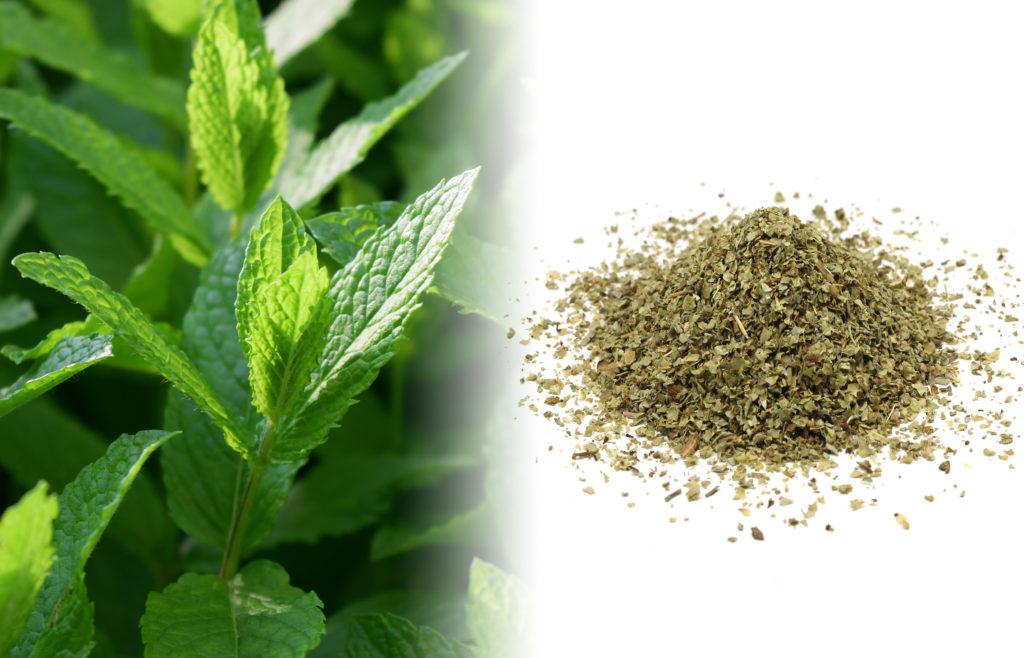 Een close-up van een muntplant. De grote groene bloembladeren zijn hoekig en ovaalvormig met kartelrand. Rechts van de verse plant staat een foto van een gedroogde kruidenmix van munt met de kleuren bruin en groen op een wit oppervlak.