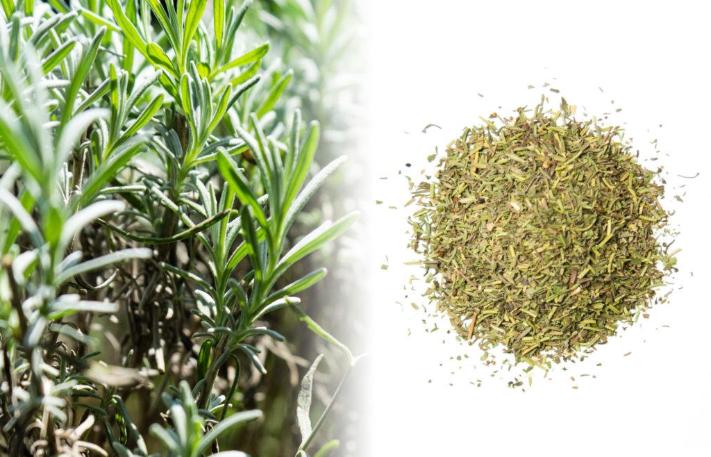Een close-up van een rozemarijnstruik. Deze heeft groene, naaldachtige blaadjes die dicht op elkaar groeien. Naast de verse plant staat een foto van een gedroogde rozemarijnmix met de kleuren bruin en groen op een wit oppervlak.