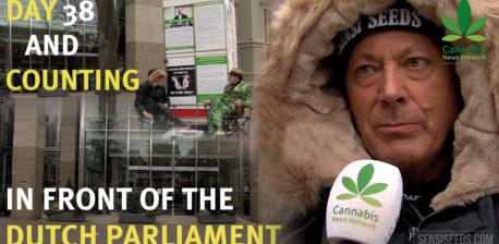 Hans Kamperman kämpft für die Cannabis-Legalisierung - Sensi Seeds Blog