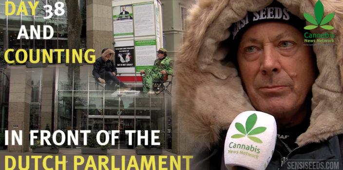 Hans Kamperman, un combat pour la légalisation du cannabis - Sensi Seeds Blog