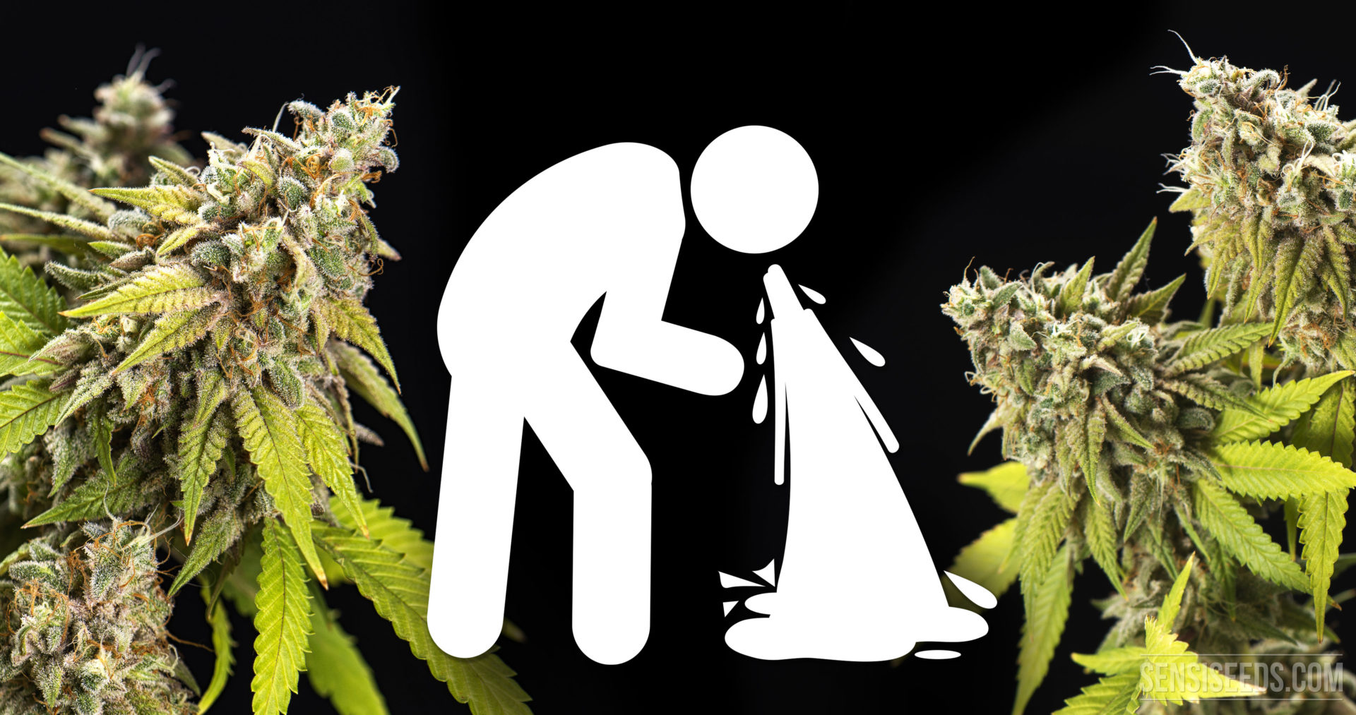 What is cannabinoid hyperemesis syndrome (CHS disease)?