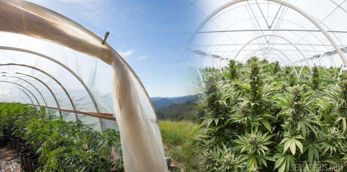 Fotomontage von zwei Gewächshäusern mit blühenden Cannabispflanzen unter strahlend blauem Himmel. Links ein kleineres Gewächshaus aus der Seitenansicht, das über ein Dach aus Stoff verfügt, rechts ein größeres Gewächshaus aus der Frontansicht mit einem fixen Dach.