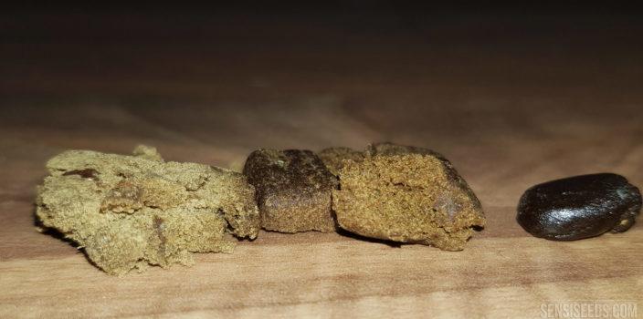 Comment choisir une variété de haschich