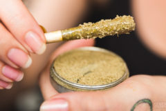 Photo of two manicured hands, holding a joint rolled in kief and an open tin of kief up to the camera.