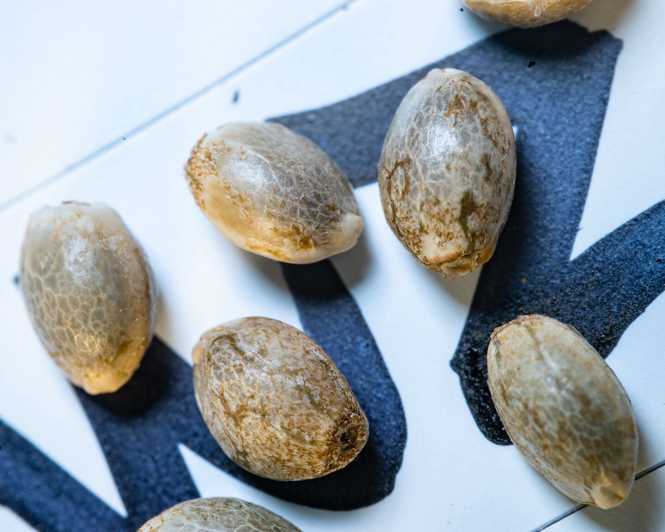 The Shape of Today's Cannabis Seed Market
