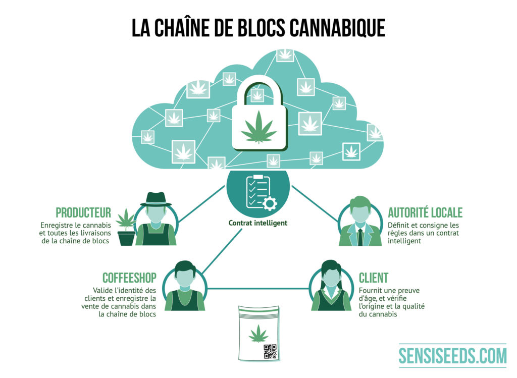 L'infographique explique le fonctionnement de la technologie blockchain dans l'industrie du cannabis. Le producteur déclare sa production et toutes les livraisons. Le coffee-shop identifie ses clients et déclare ses ventes de cannabis. Les autorités locales définissent et enregistrent les règles de conduite. Le consommateur justifie de son âge et contrôle l'origine et la qualité du cannabis. Les producteurs, les autorités locales et les coffee-shops sont liés par le biais d'un « contrat intelligent ».